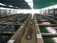 Fish Breeding Tunnel